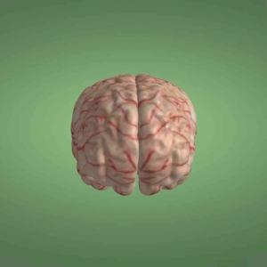 大脑神经模型